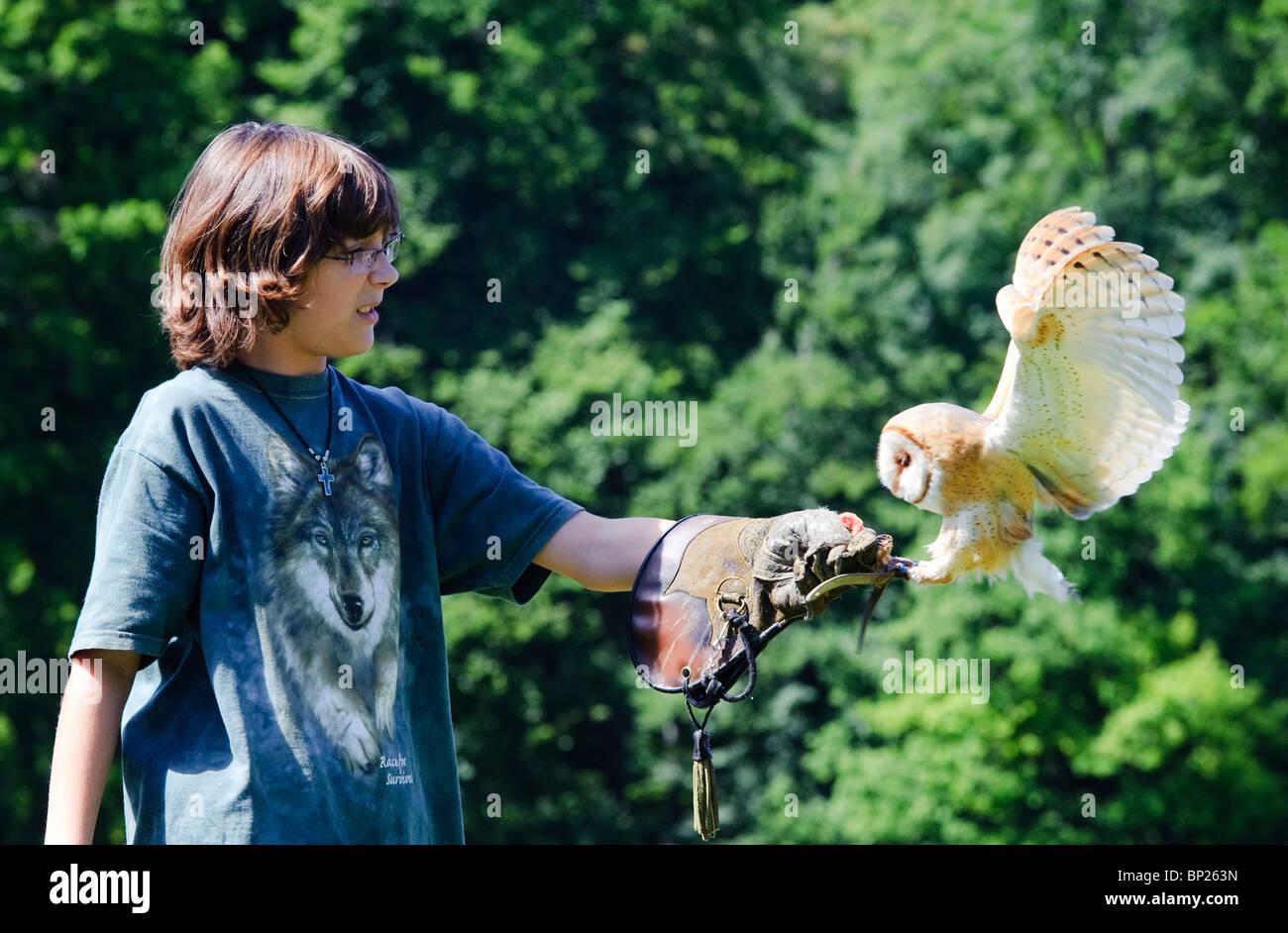 Falconry Display with Barn Owl - Stock Image