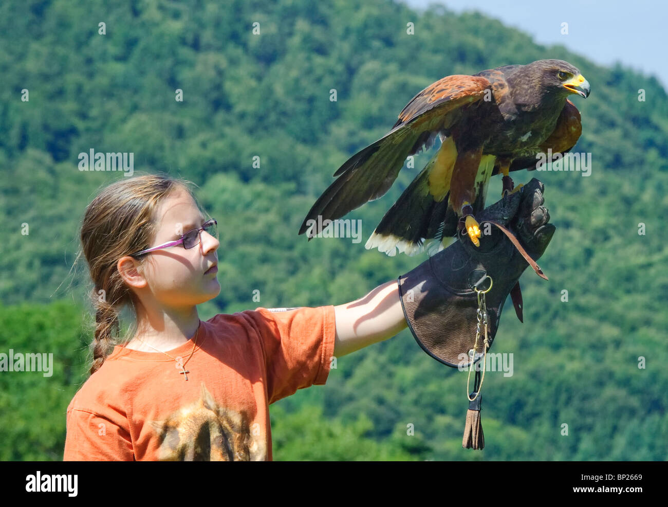 Young Girl and Harris's Hawk - Stock Image