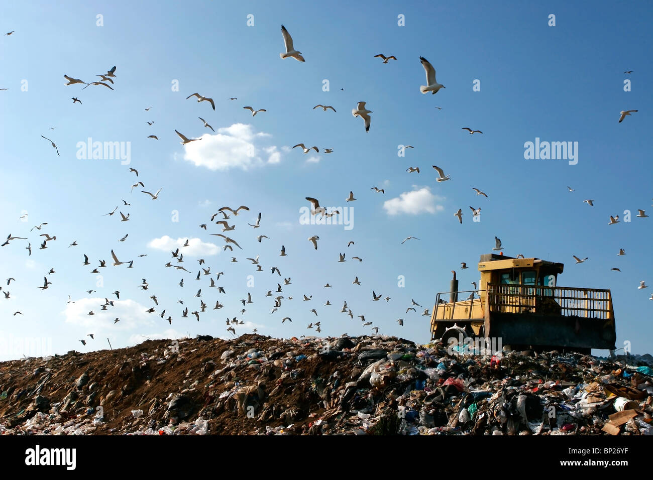 Landfill with bulldozer working, against beautiful blue sky full of sea birds. Great for environment and ecological - Stock Image