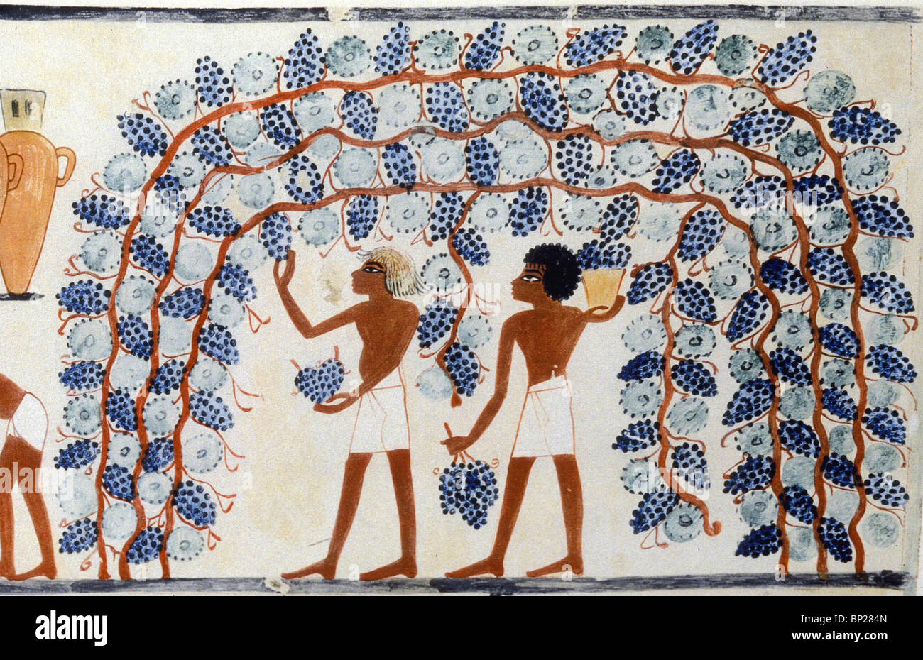 1830. GATHERING GRAPES, THEBES, TUTHMOSIS IV. 1420 - 1411 - Stock Image