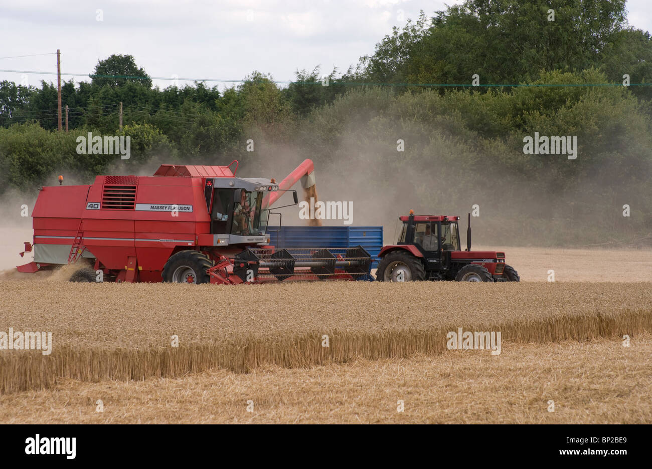 LOADING WHEAT IN THE FIELD - Stock Image