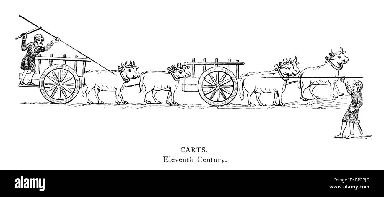 Black and White Illustration; 11th Century carts being pulled by Oxen from an Illuminated Manuscript - Stock Image