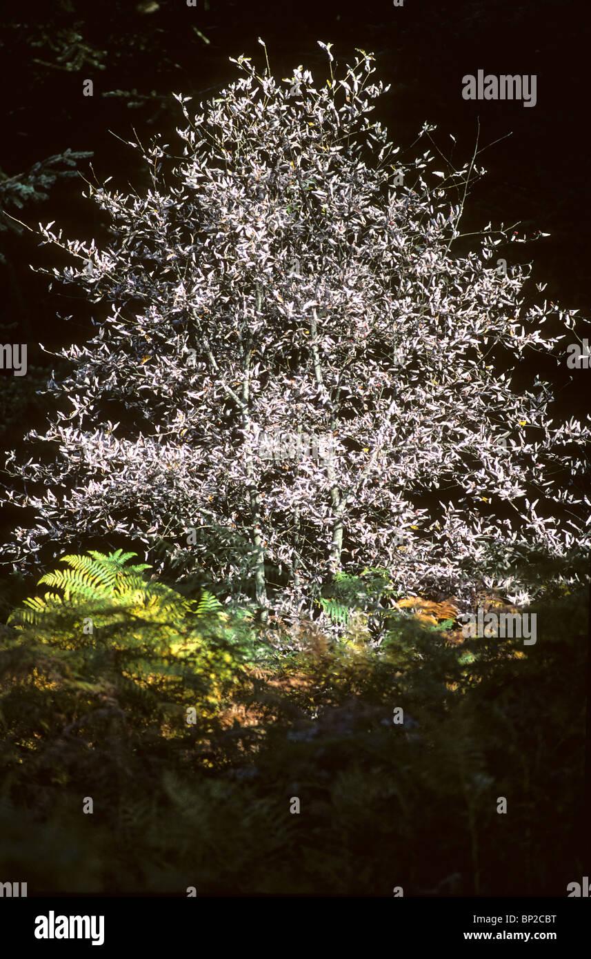 arbre et fougère d'un sous bois, tree and ferns - Stock Image