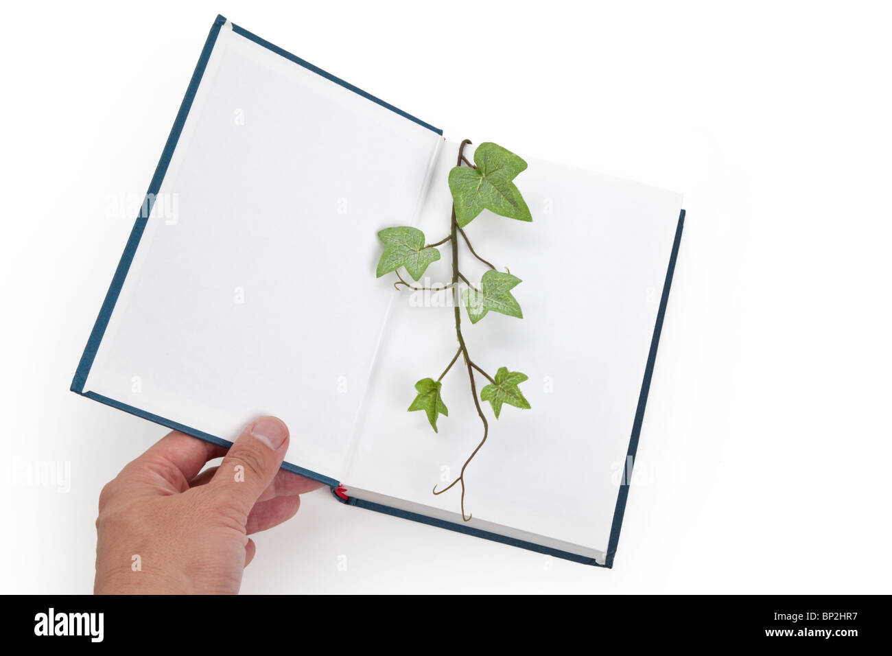 Blue book and sprout, education concept - Stock Image