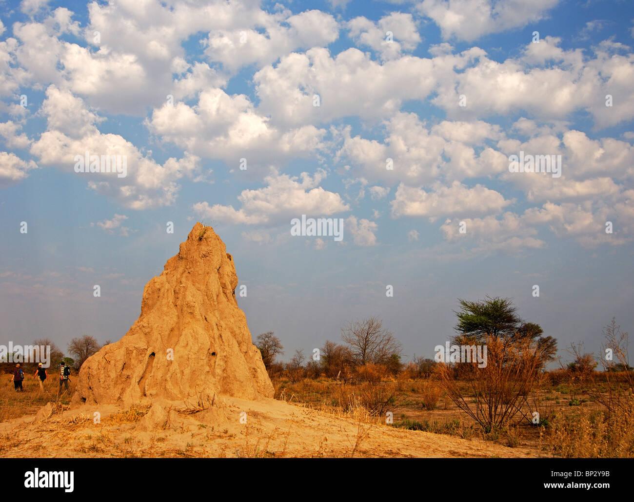 Termite mound under cumulus clouds, Okavango Delta, Botswana - Stock Image