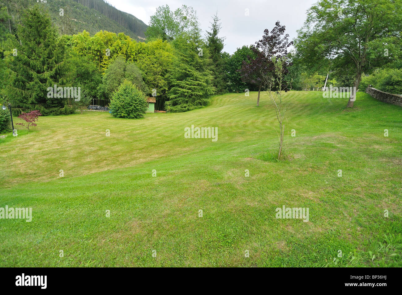 garden with a big area of lawn and different trees - Stock Image