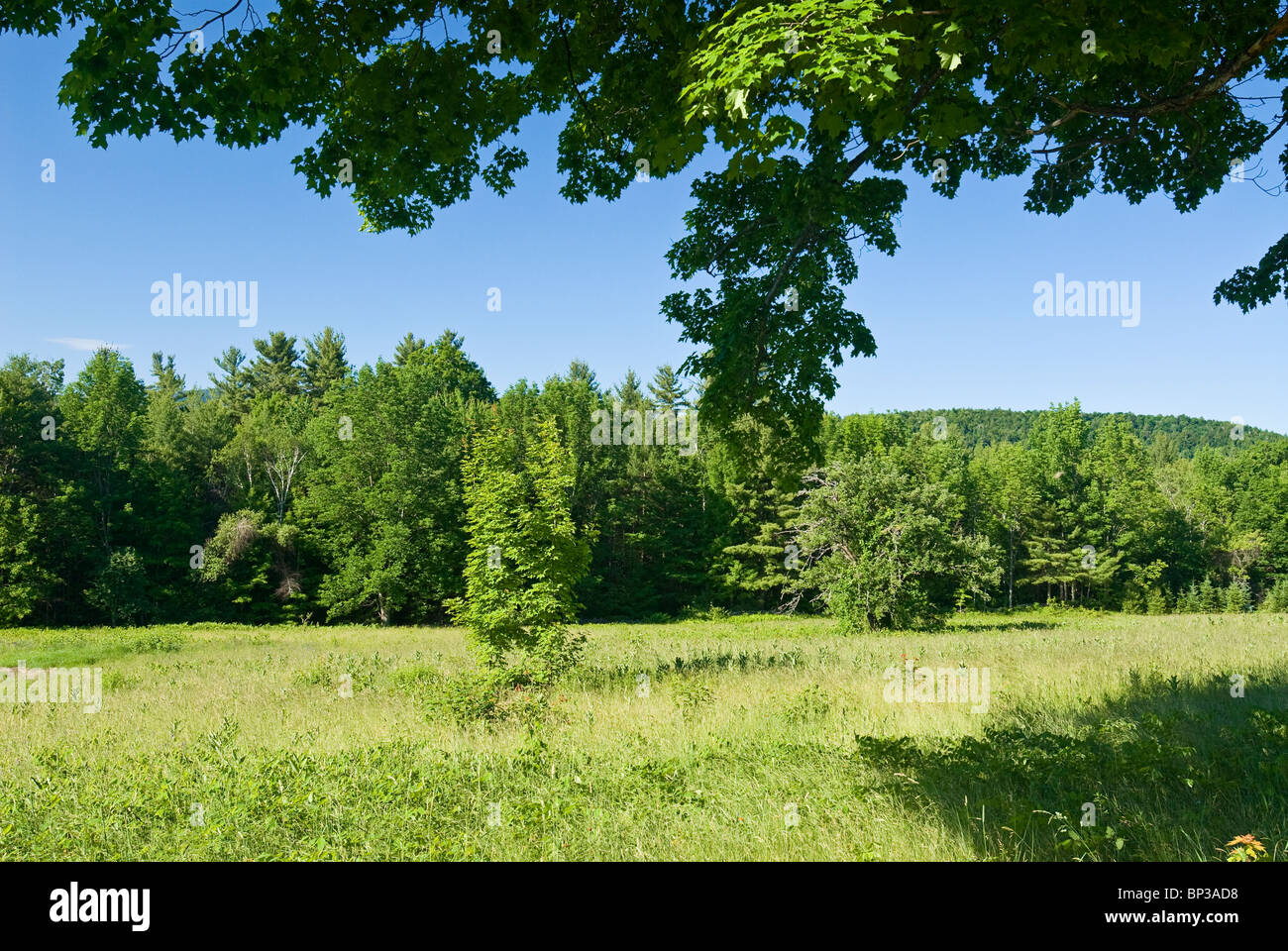 Green Field in Summer, New Hampshire. - Stock Image