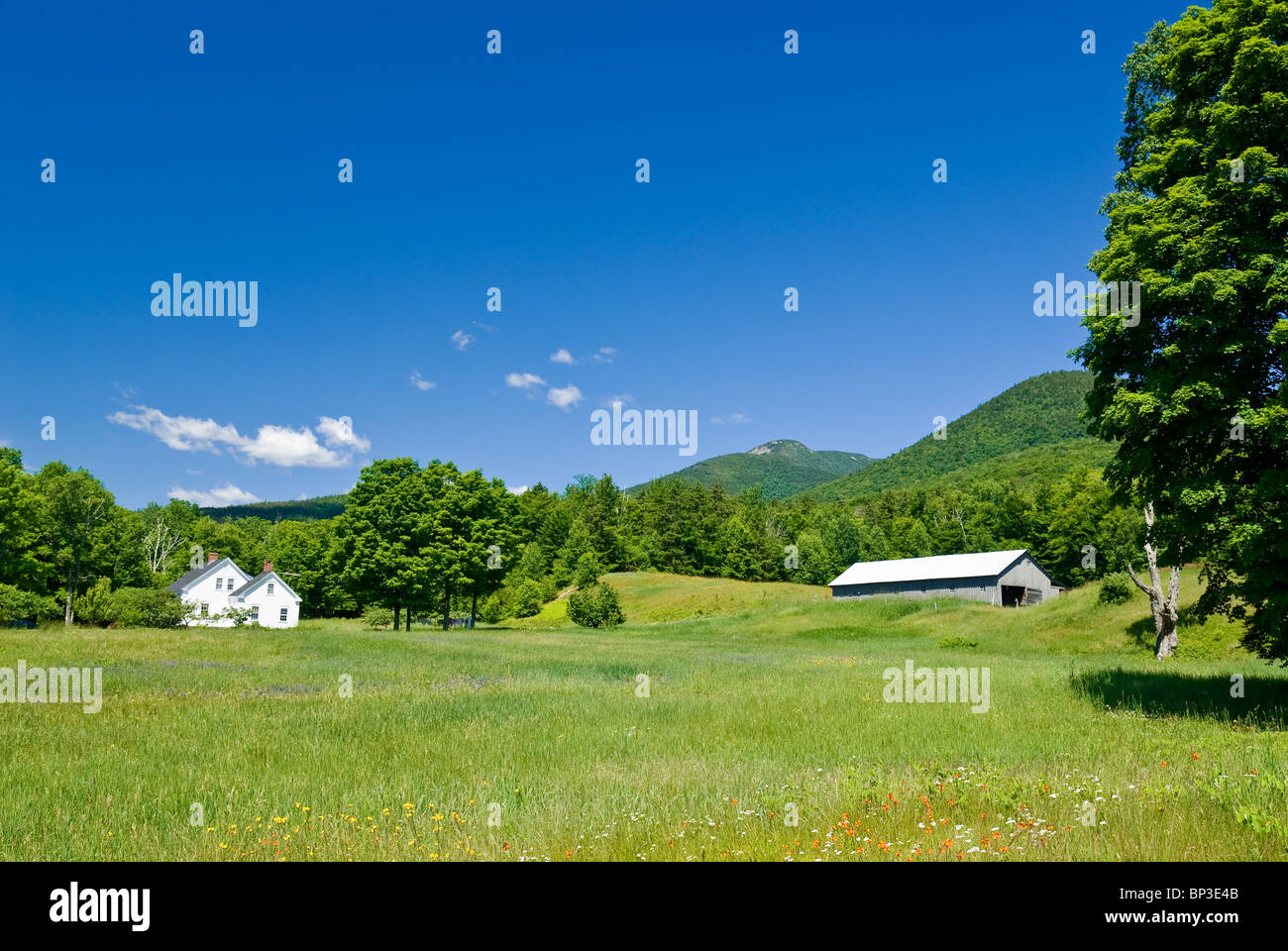 Rural Landscape with green meadow, New Hampshire, USA. - Stock Image