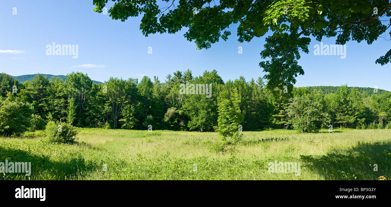 Green Field in Summer with green meadow, New Hampshire. - Stock Image
