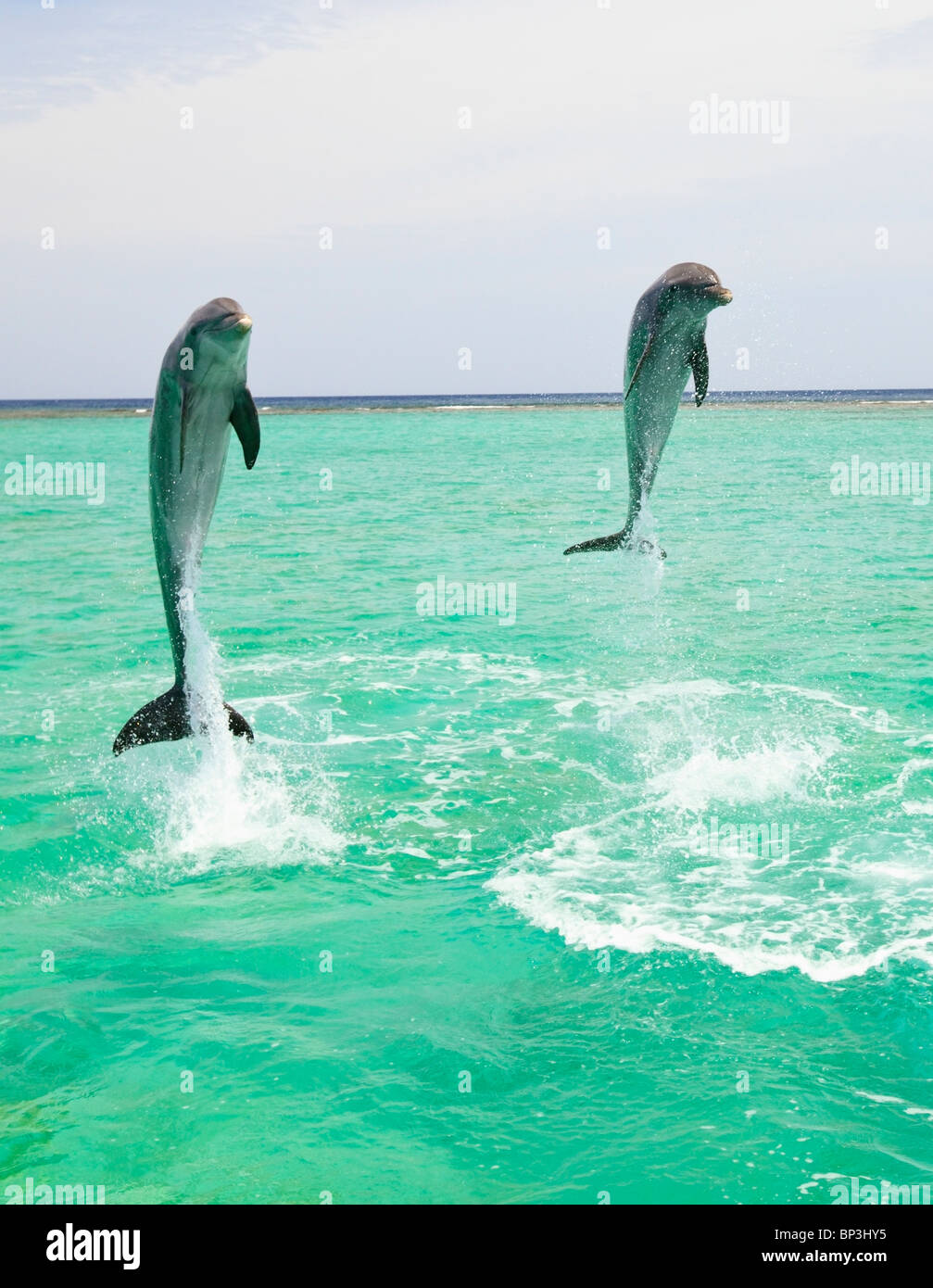 Two Dolphins Jumping Out Water Stock Photos & Two Dolphins Jumping ...