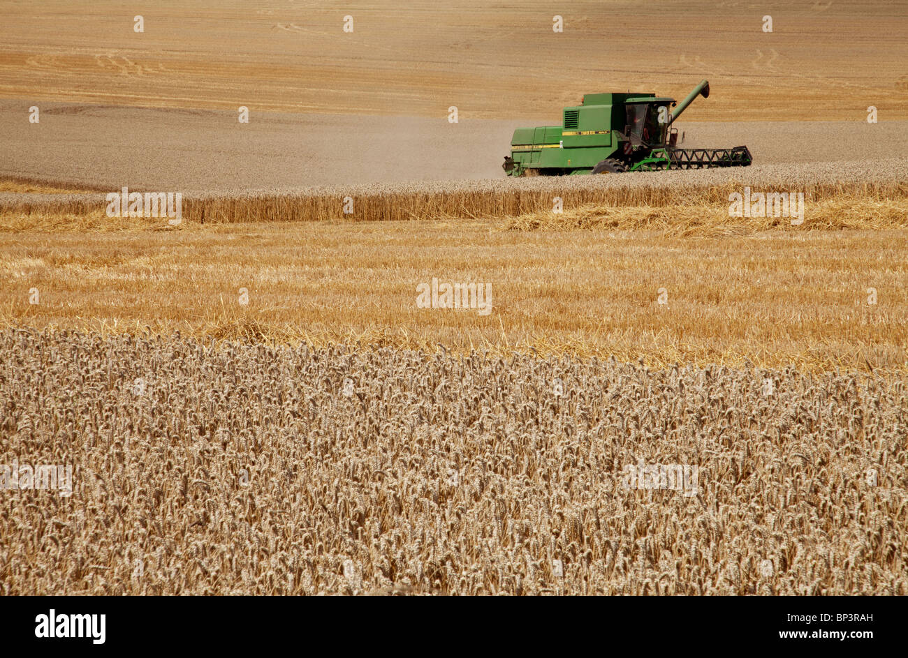 HARVESTING WHEAT - Stock Image