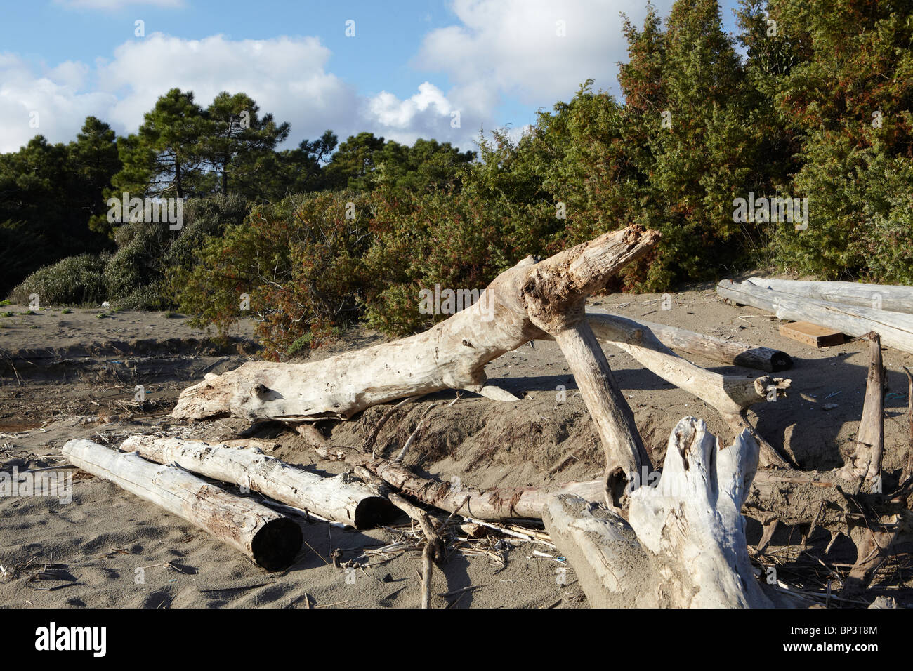 Driftwood on a beach in Follonica, Italy - Stock Image
