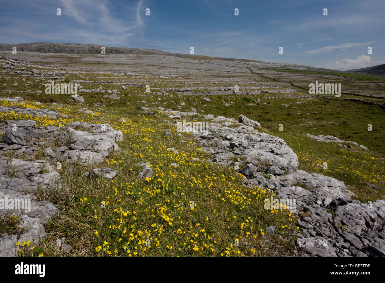 Hoary rockrose and bird's foot trefoil on limestone pavement/grassland, Black Head, the Burren, Eire - Stock Image