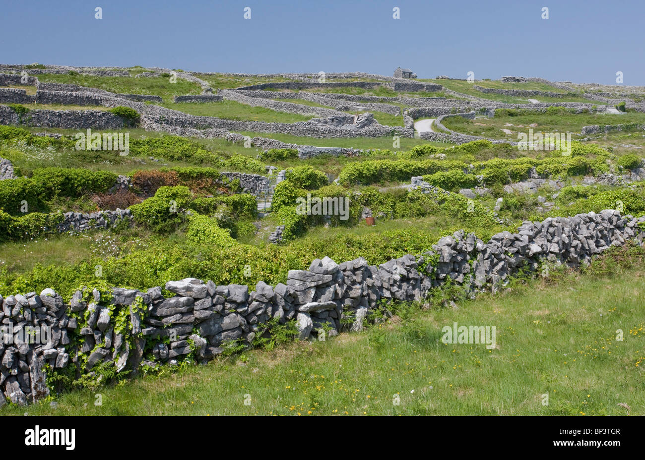 Small limestone-walled old fields on Inisheer (Inis Oírr), the Burren, western Eire - Stock Image