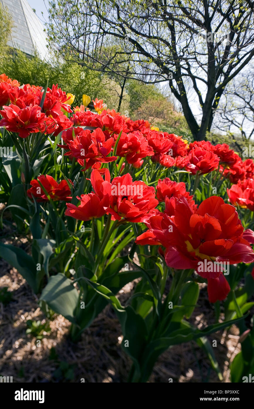 Tall Red Flower Stock Photos & Tall Red Flower Stock Images - Alamy