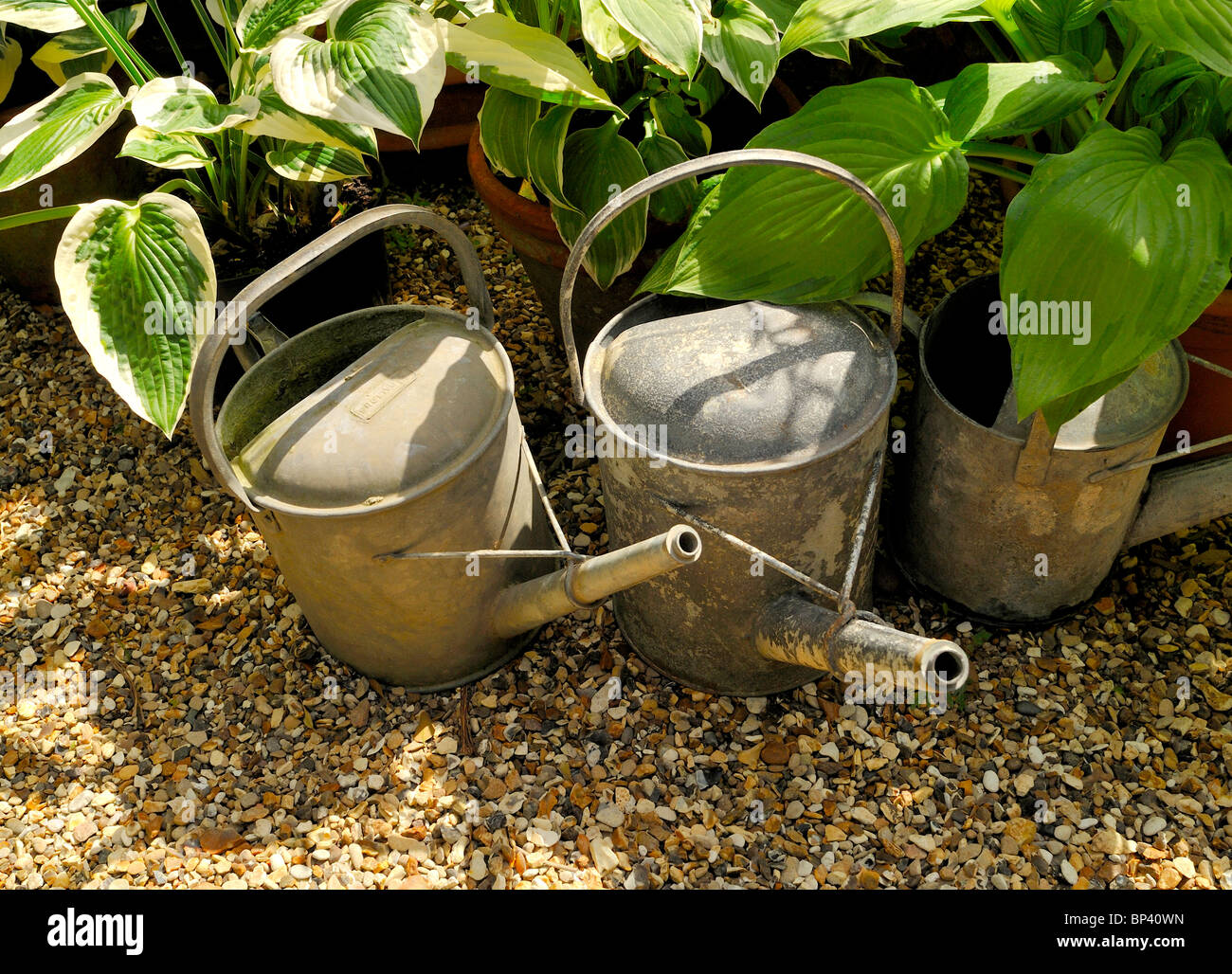 OLD METAL WATERING CANS - Stock Image