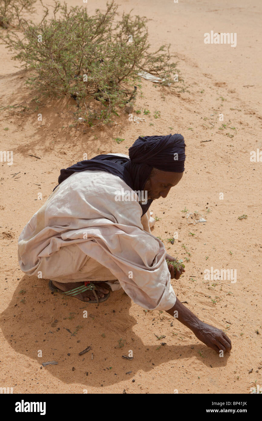 ABALA, NIGER, 30th July 2010: Tribal chief Bubacar Maman, 70, is reduced to picking weeds to survive because of - Stock Image