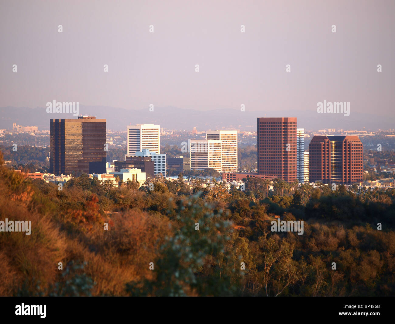 Medium sized buildings rise above an Urban Forest in Southern California. - Stock Image