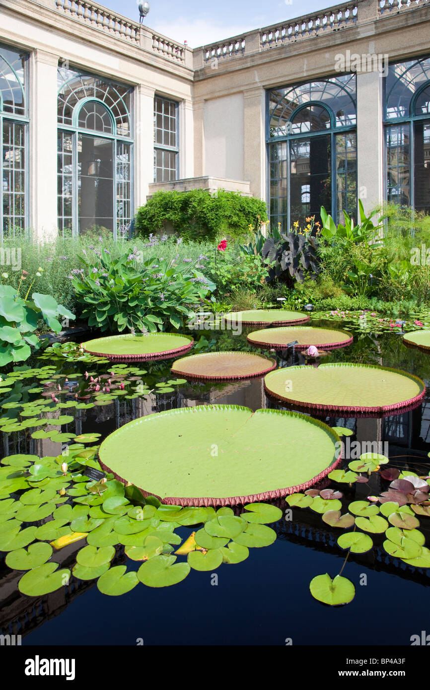 A host of tropical waterlilies, hardy waterlilies, lotuses, and giant water-platters grow in lily ponds at Longwood - Stock Image