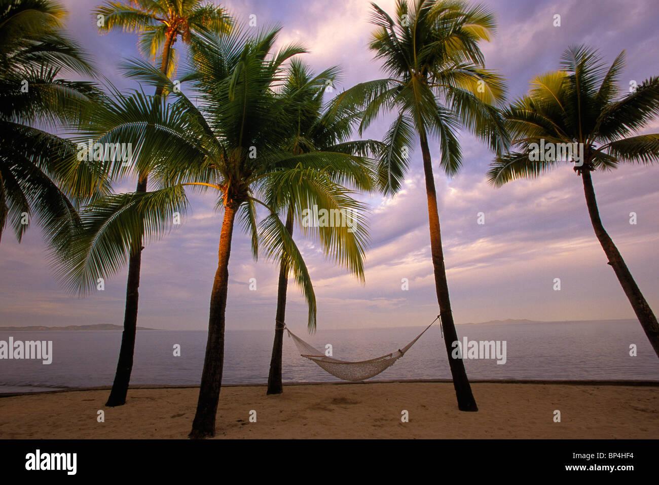 Palm trees with hammock on beach, Fiji, Pacific Ocean Stock Photo