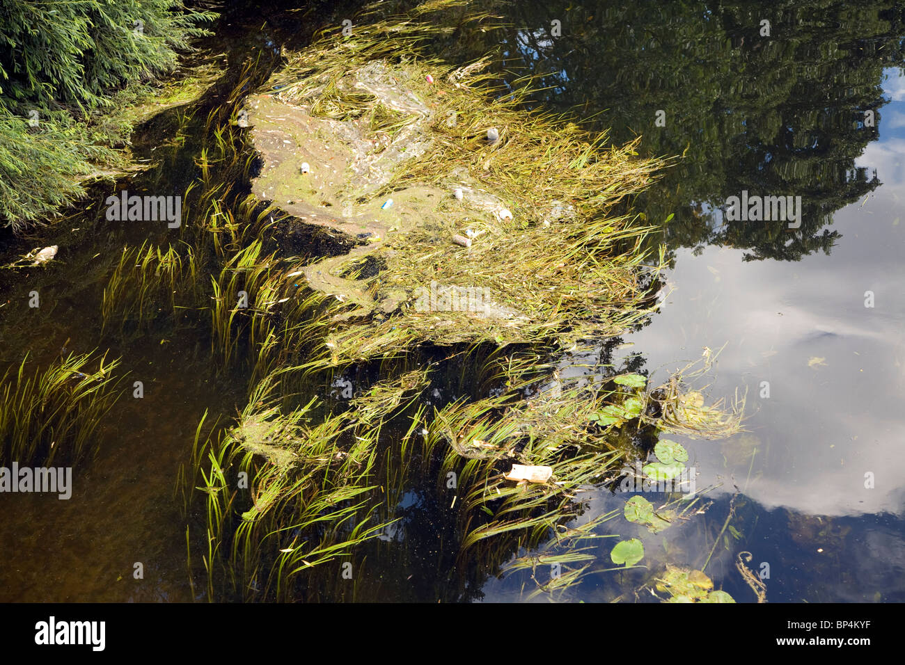 Litter river pollution in weeds River Wensum, Norwich, England - Stock Image
