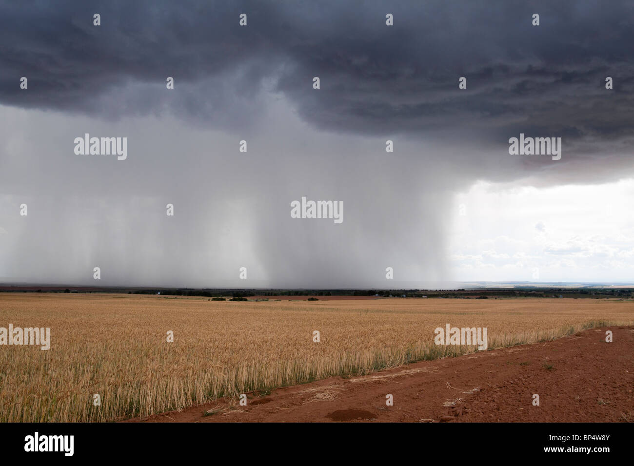 Rain streaking down from dramatic dark looming cumulus cloud formations onto farmland in the distance - Stock Image