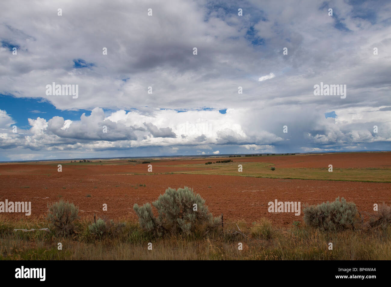 Dramatic cumulus cloud formations looming over a vast field of tilled red soil with sage bushes in southwest Colorado - Stock Image
