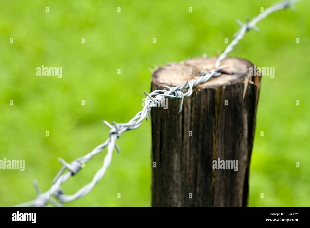 Detail of the simple barb wire. - Stock Image