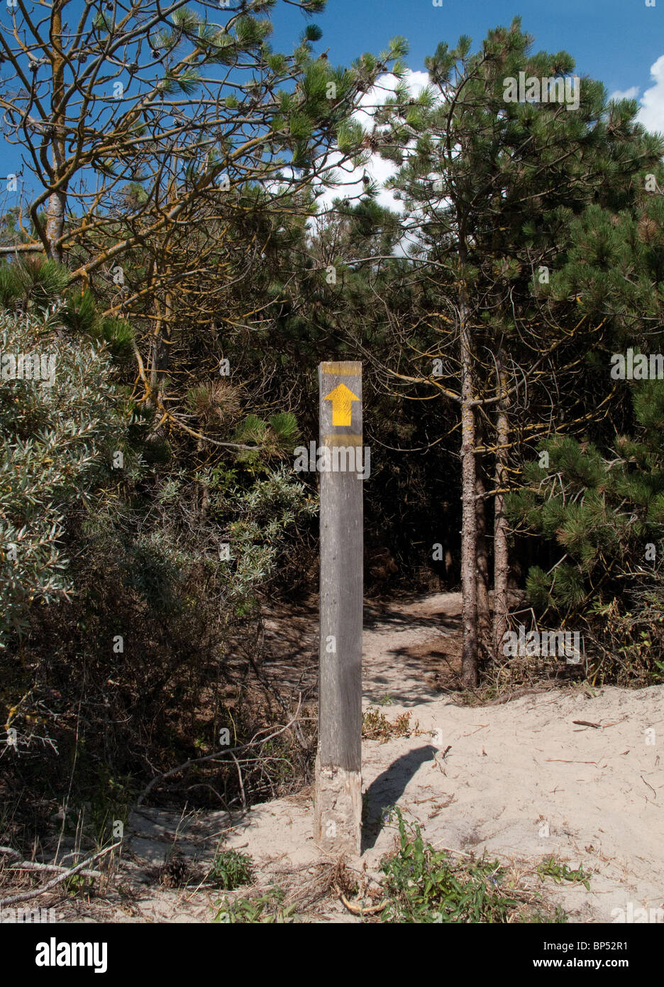 Wooden signpost showing direction into forest at Le Touquet - Stock Image