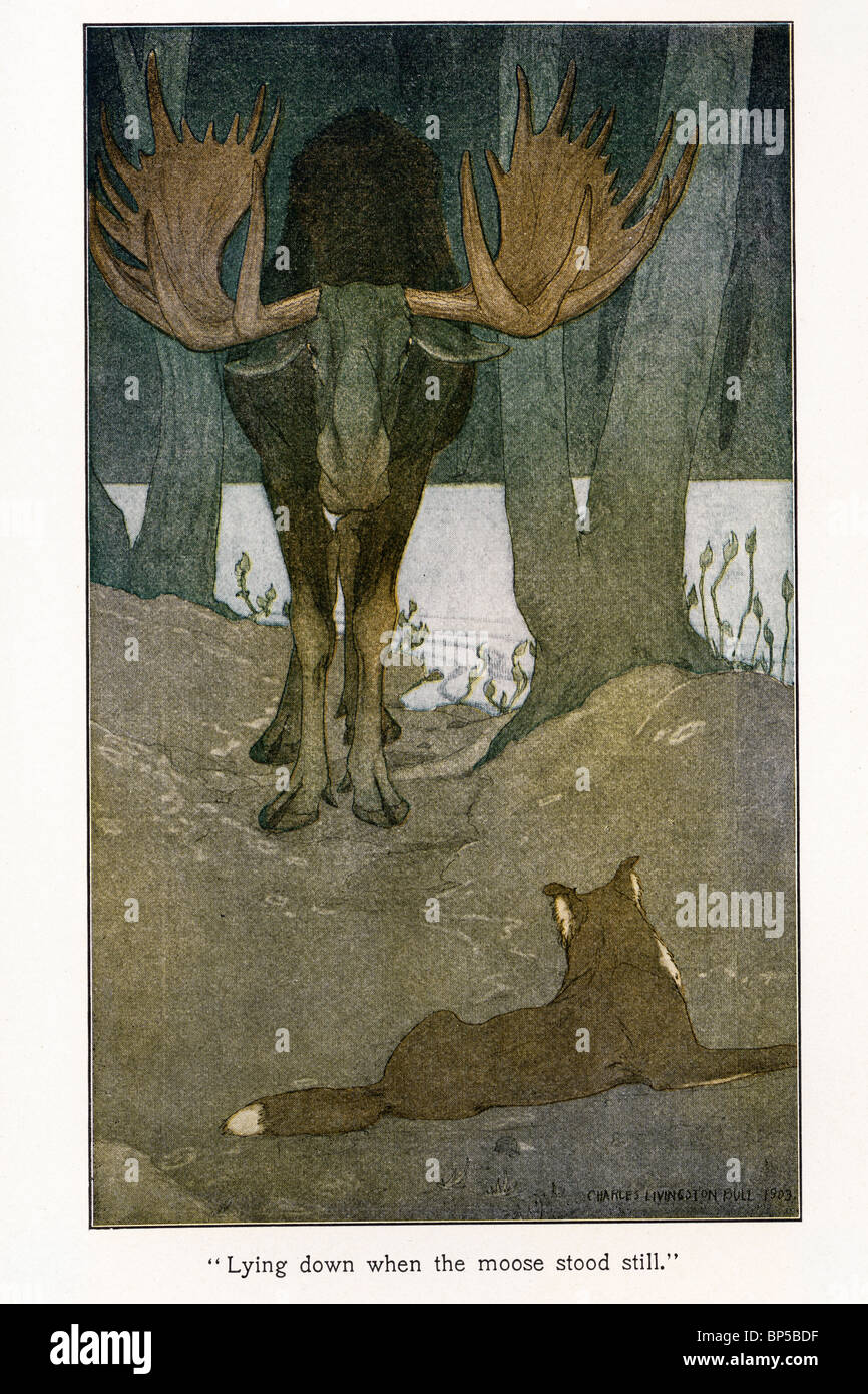 Illustration From The Call Of Wild By Jack London 1903 1904 Illustrated Philip R Goodwin And Charles Livingston Bull