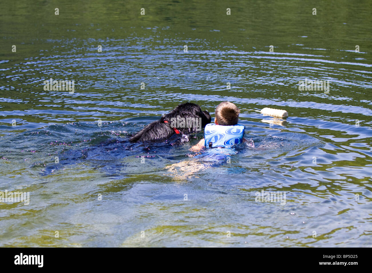 A child being pulled out of the water by a Newfoundland dog. - Stock Image