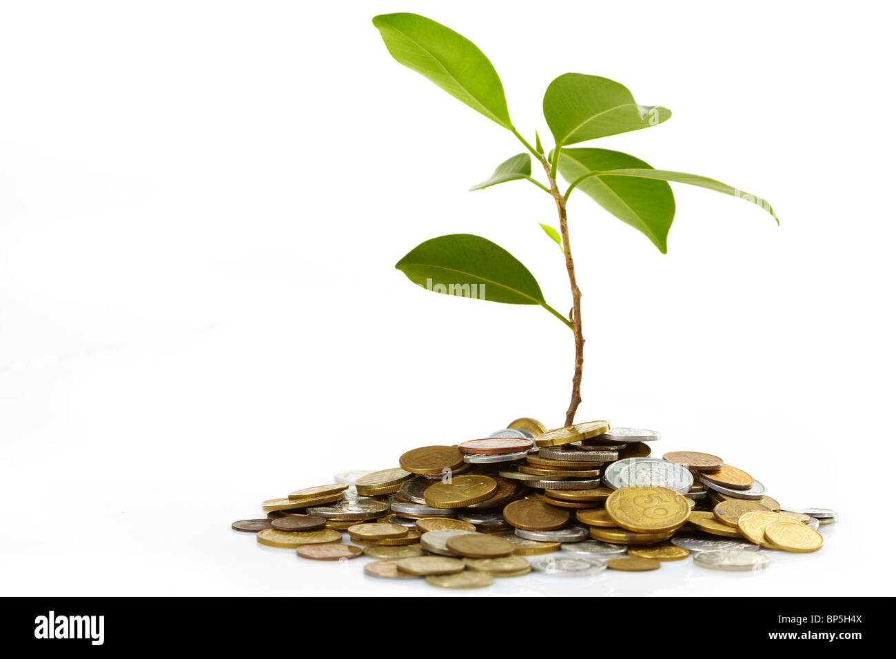 Coins sprout - Stock Image