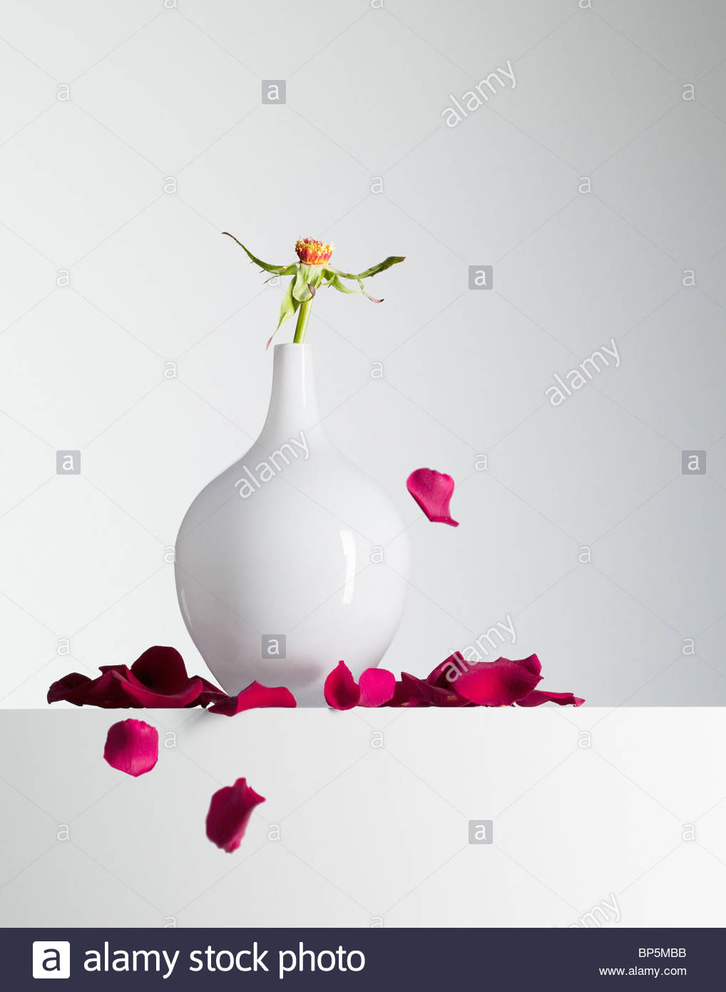 Red flower petals falling from stem in vase - Stock Image