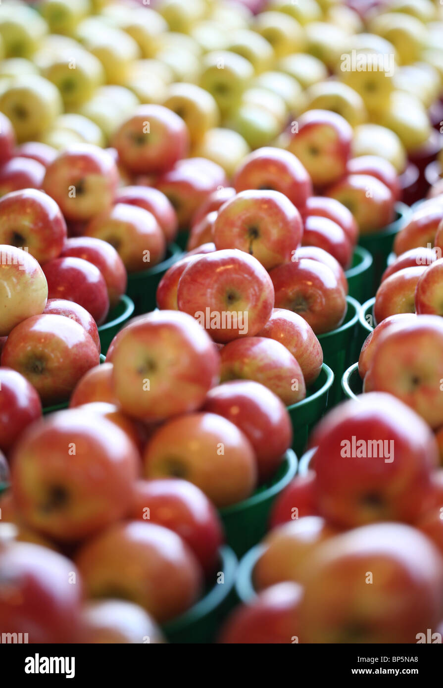 A collection of trays with fresh farmer's market red and yellow apples - Stock Image