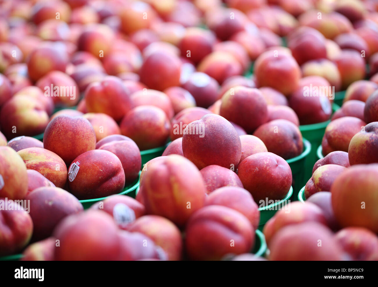 A collection of trays with fresh farmer's market nectarines - Stock Image