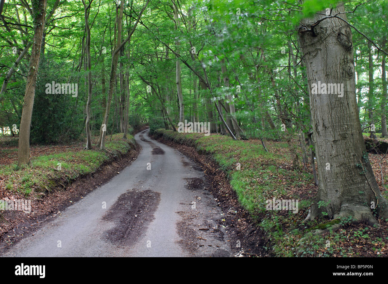Tree-lined road in the Chilterns near Turville, Buckinghamshire, England, UK - Stock Image