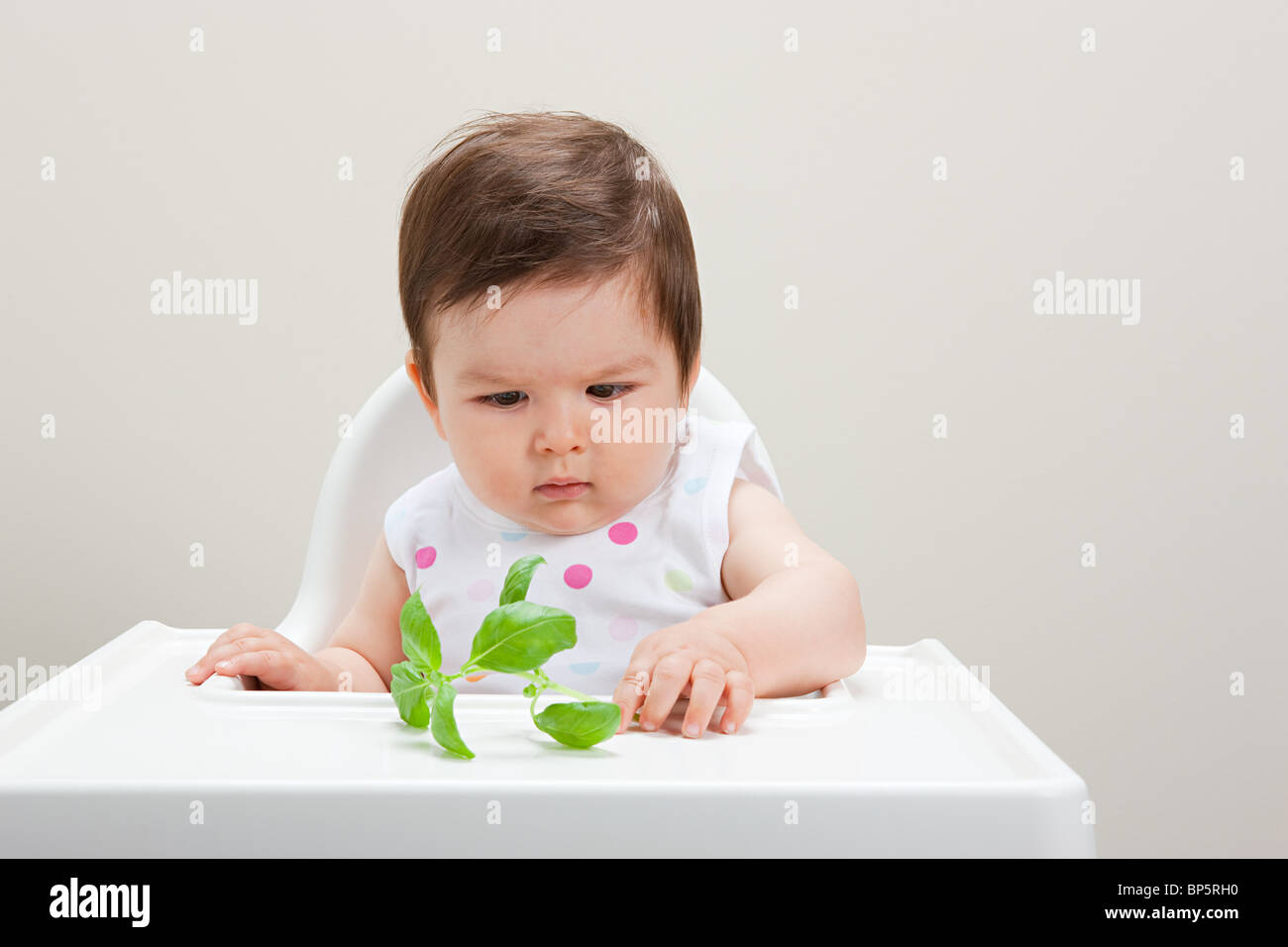 Baby boy looking at basil leaf - Stock Image