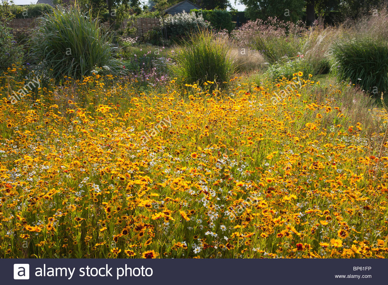 Pictorial meadow annual mix warm colour - Stock Image
