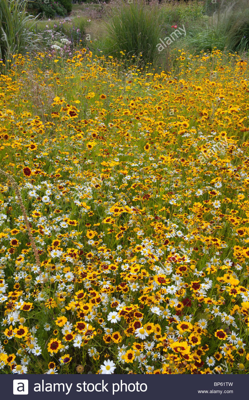 Pictorial meadow annual mix - Stock Image