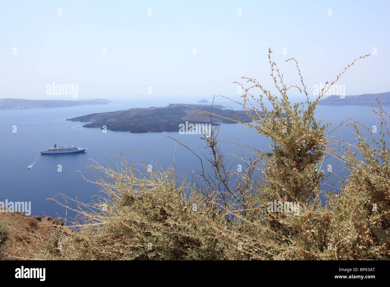 Cretean prickle on Caldera background, Santorini Crete, beautiful sea landscape - Stock Image