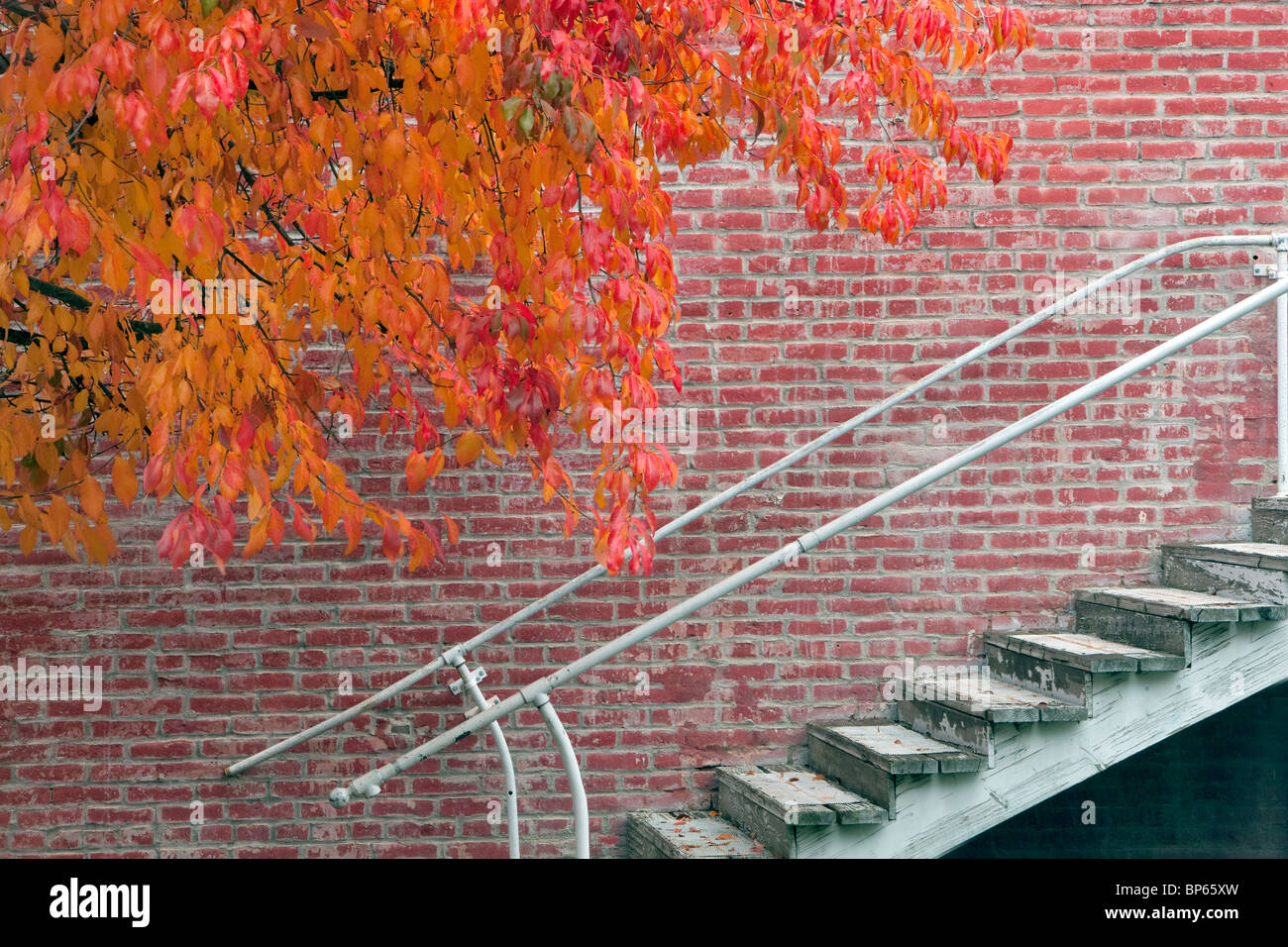 Fall color next to brick building and stairs. Jacksonville, Oregon - Stock Image