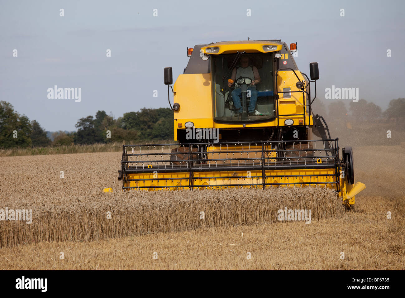 New Holland combine harvester harvesting wheat field Cotswolds UK - Stock Image