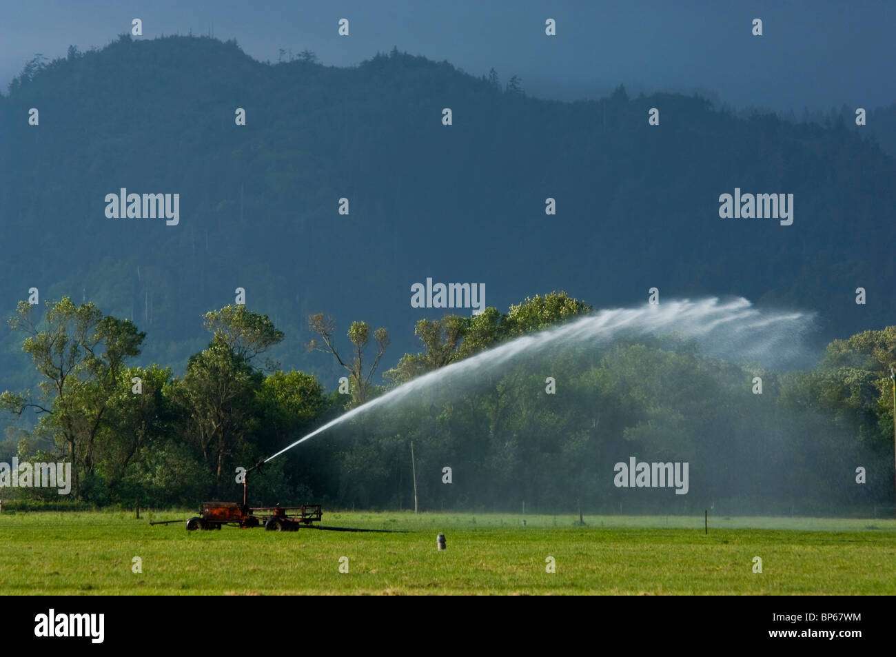 Agricultural water sprinkler in grass field near Ferndale, California - Stock Image