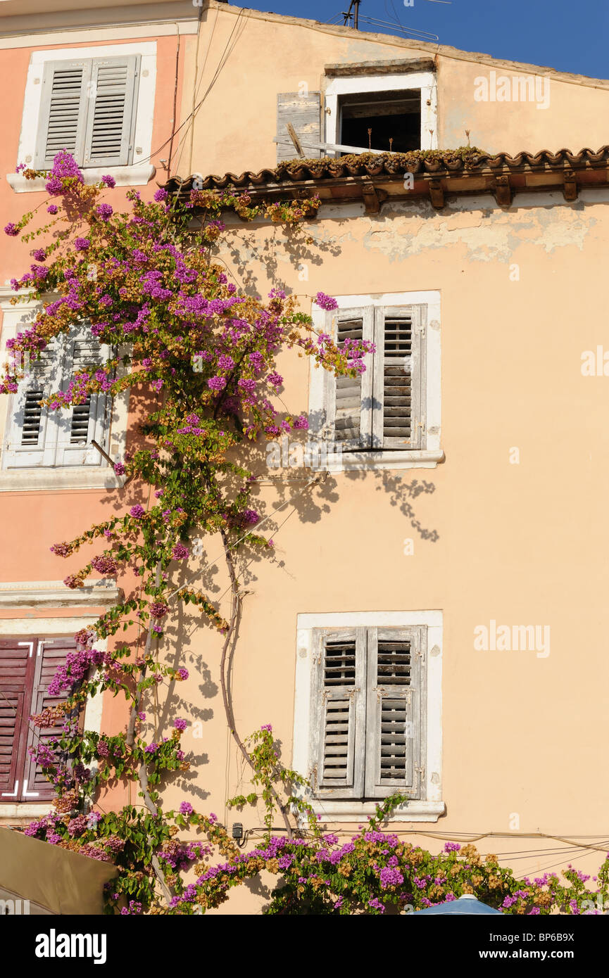 Vines House Wall Stock Photos & Vines House Wall Stock Images - Alamy