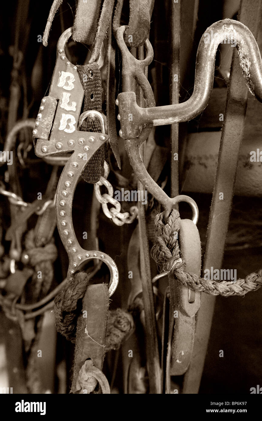 Horse Bridle and Bit - Stock Image