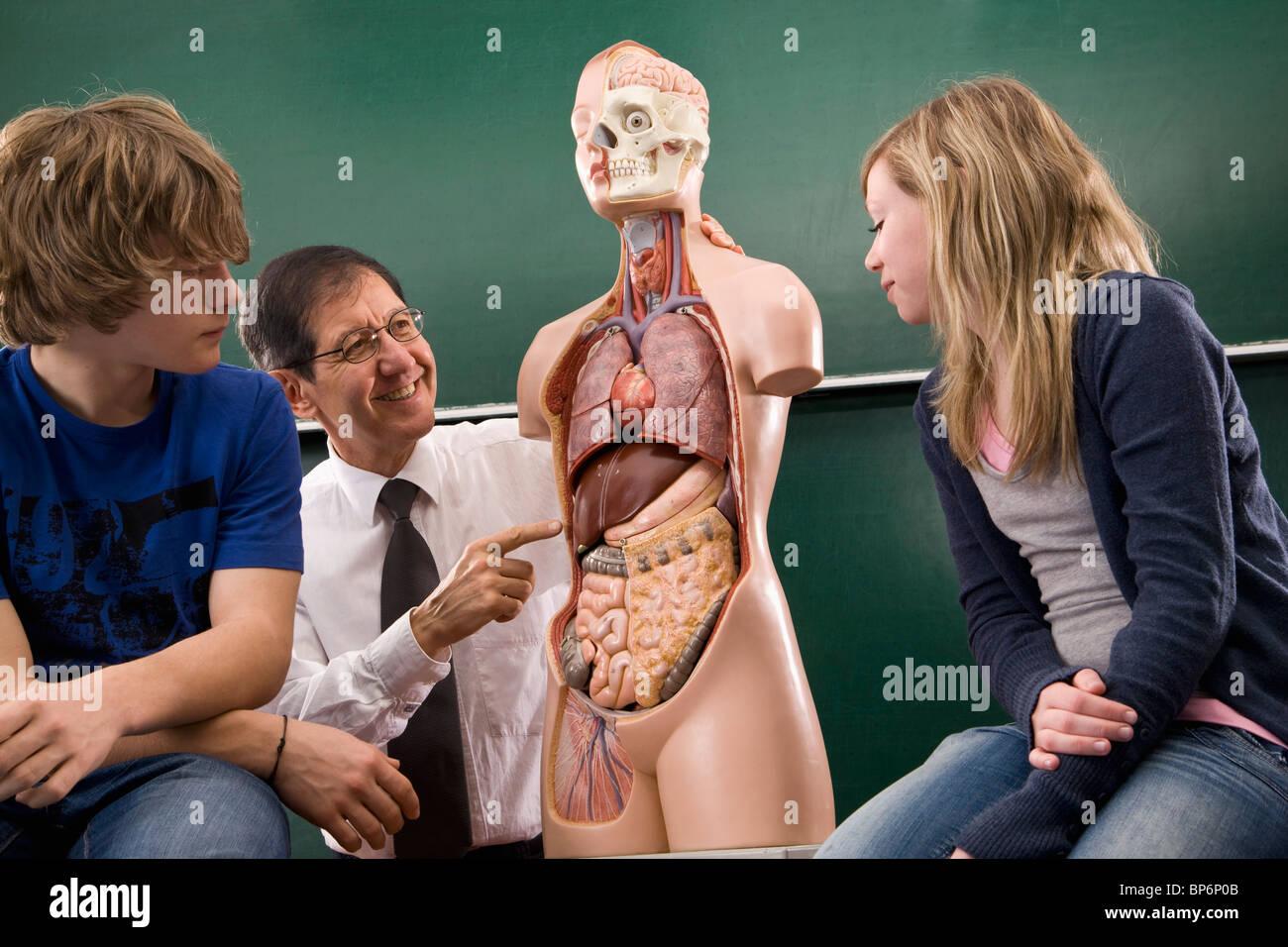 A biology teacher teaching students anatomy - Stock Image