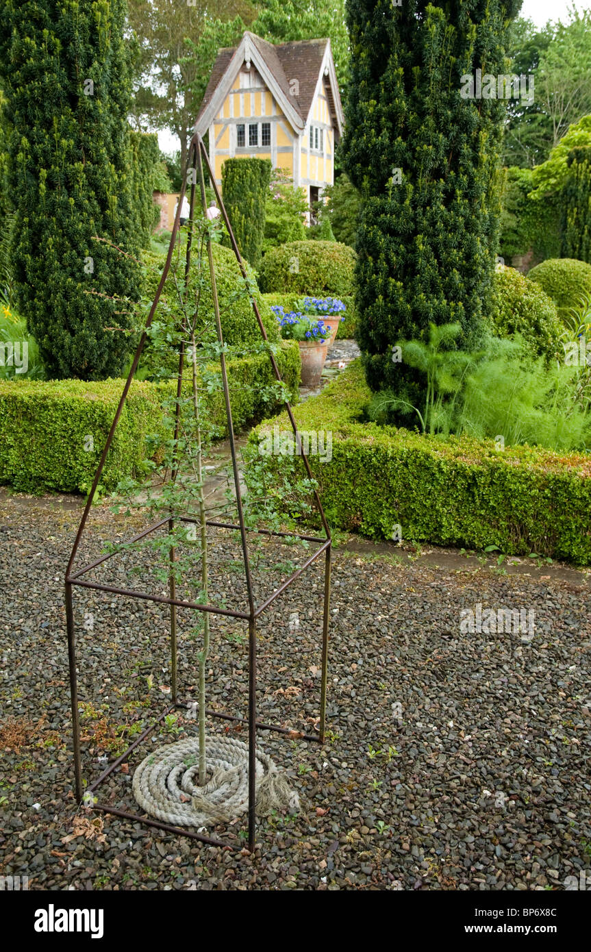 Young Tree with Topiary metal structure, box hedging and garden folly in the background.  Bryans Ground, UK. - Stock Image
