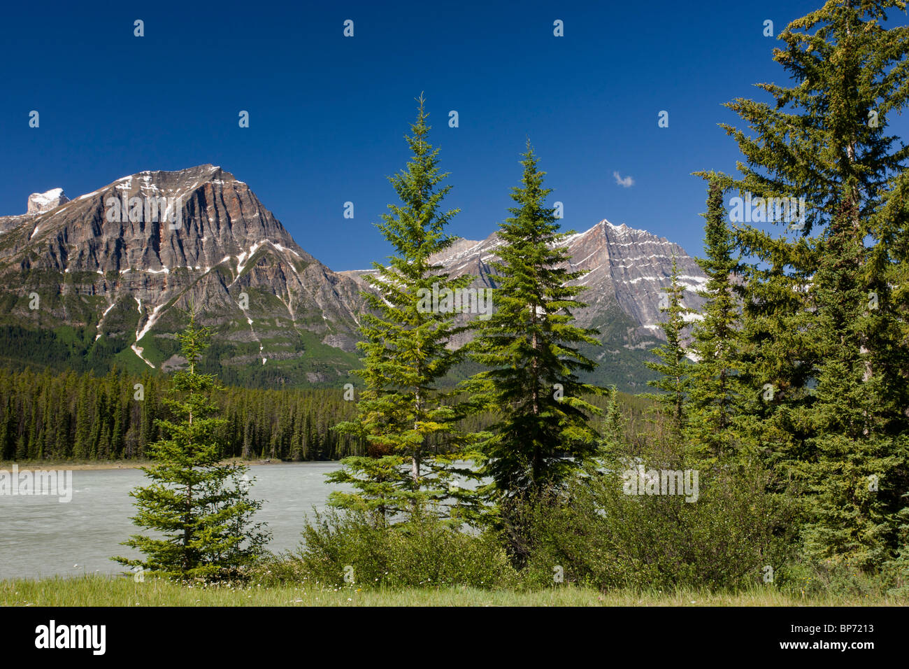 Engelmann Spruces by the Athabasca River, Jasper National Park, The Rockies, Canada - Stock Image