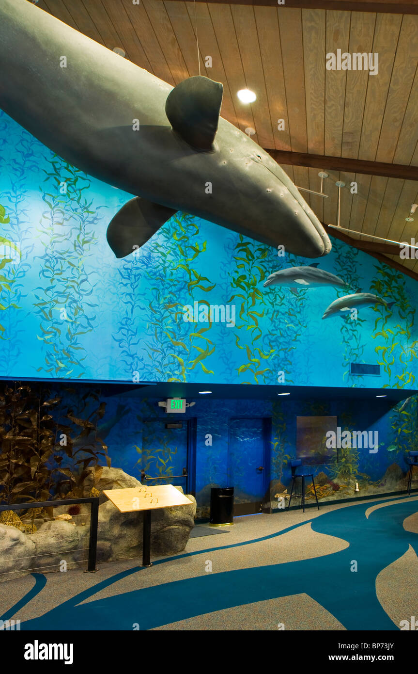 Model of grey whale hanging from ceiling at Point Vicente Interpretive Center, Palos Verdes Peninsula, California - Stock Image