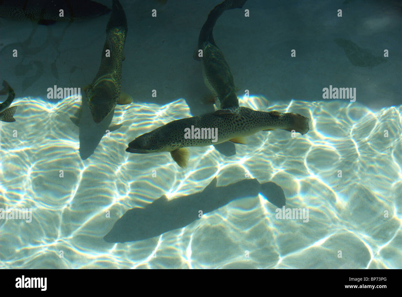 Fish hatchery for Finger Lakes and Ontario Lake area trout fishermen. - Stock Image